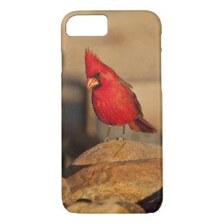 Coque iPhone 7 Cardinal, cardinalis de Richmondena, du sud-est
