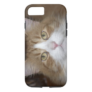 Coque iPhone 7 Chat de ragondin orange de Jack et blanc