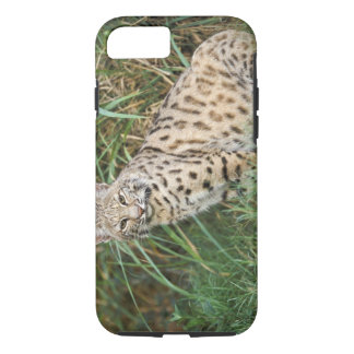 Coque iPhone 7 Chat sauvage (rufus de Felis)