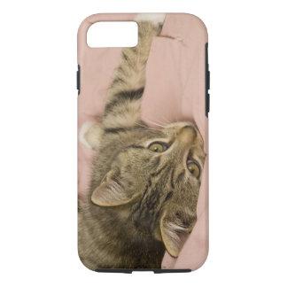 Coque iPhone 7 Chat tigré argenté étiré sur le couvre-lit