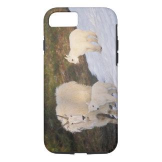 Coque iPhone 7 chèvres de montagne, Oreamnos américanus, mère et