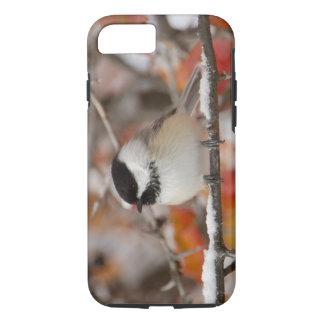 Coque iPhone 7 Chickadee Noir-couvert par adulte dans la neige,