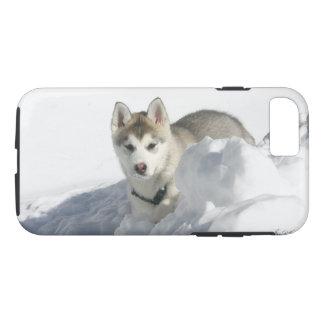 Coque iPhone 7 Chiot de chien de traîneau sibérien dans la neige