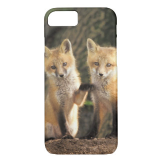 Coque iPhone 7 Chiot de Fox rouge devant le vulpes de Vulpes de