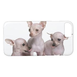 Coque iPhone 7 Chiwawa chauve (5 et 7 mois)
