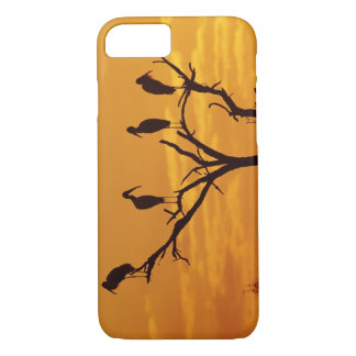Coque iPhone 7 Cigogne en bois, Mycteria americana, adultes à