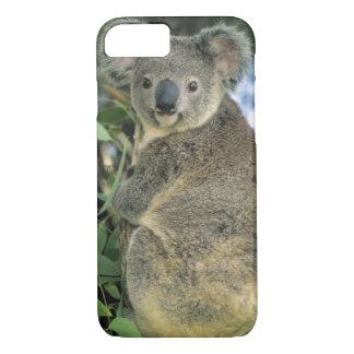 Coque iPhone 7 Cinereus de koala, de Phascolarctos), mis en