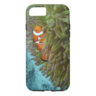 Coque iPhone 7 Clownfish occidental (ocellaris d'Amphiprion),