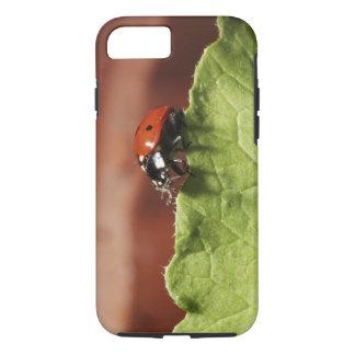 Coque iPhone 7 Coccinelle sur la feuille de laitue (M.)