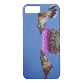 Coque iPhone 7 colibri Large-coupé la queue, Selasphorus