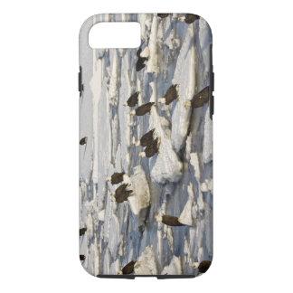 Coque iPhone 7 Eagle chauve, leucocephalus de Haliaeetus, Homer,