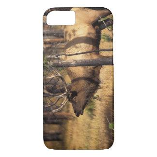 Coque iPhone 7 élans, elaphus de Cervus, bugles de taureau dans