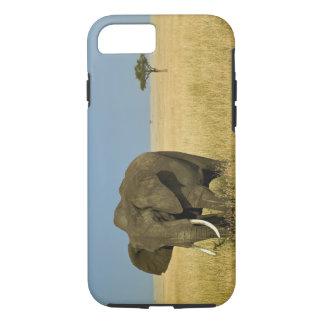 Coque iPhone 7 Éléphant africain frôlant dans l'herbe grande