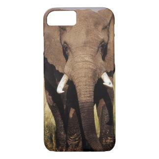 Coque iPhone 7 Éléphant de Bush d'Africain