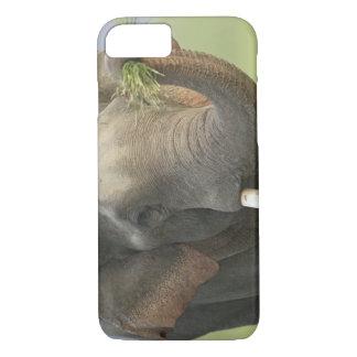 Coque iPhone 7 Éléphant indien/asiatique montrant la nourriture,