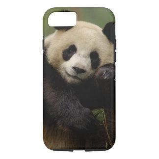 Coque iPhone 7 Famille de melanoleuca d'Ailuropoda de panda