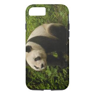 Coque iPhone 7 Famille de panda géant (melanoleuca d'Ailuropoda)