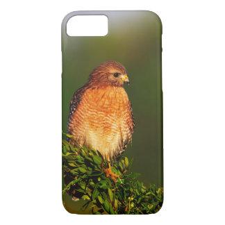 Coque iPhone 7 faucon Rouge-épaulé (lineatus de Buteo) dedans tôt