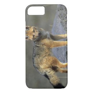 Coque iPhone 7 Fox andin, (culpaeus de Dusicyon), Paramo le