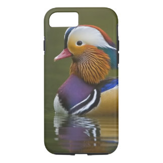Coque iPhone 7 Galericulata sauvage d'Aix de canard de mandarine)