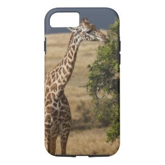 Coque iPhone 7 Girafe de Maasai (girafe Tippelskirchi) en tant