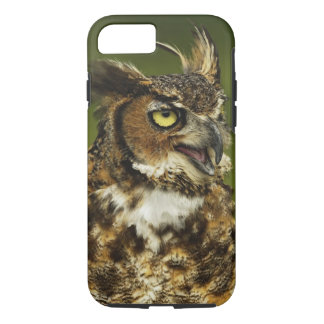 Coque iPhone 7 Grand hibou à cornes, virginianus de Bubo, captif