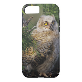 Coque iPhone 7 Grand hibou à cornes, virginianus de Bubo, jeune