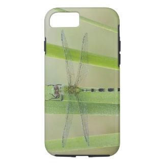 Coque iPhone 7 Grand Pondhawk, vesiculosa d'Erythemis, adulte