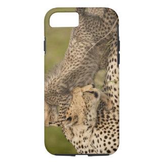 Coque iPhone 7 Guépard, jubatus d'Acinonyx, avec l'petit animal