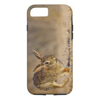Coque iPhone 7 Houblonnage de lapin de lapin oriental