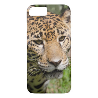 Coque iPhone 7 Jaguar captif dans la clôture 2 de jungle