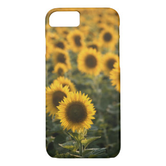 Coque iPhone 7 La France, Vaucluse, gisement de tournesols