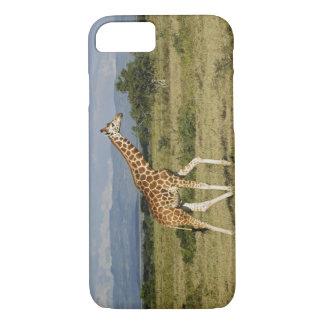 Coque iPhone 7 La girafe de Rothschild, camelopardalis de Giraffa