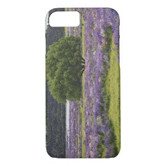 Coque iPhone 7 La Nouvelle Zélande, île du sud. Floraison de loup