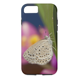 Coque iPhone 7 La Thaïlande, Khon Kaen, le bleu pâle d'herbe
