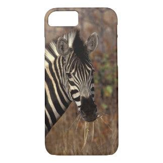 Coque iPhone 7 L'Afrique, Afrique du Sud, portrait de zèbre de