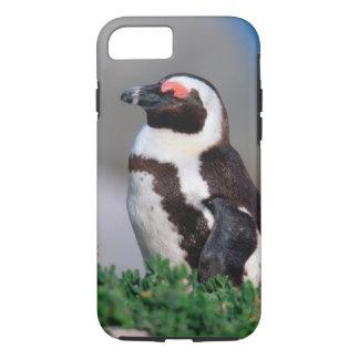 Coque iPhone 7 L'Afrique du Sud, ville de Simons. Âne de sommeil