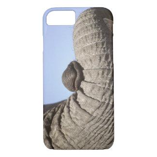 Coque iPhone 7 L'Afrique, Kenya, Samburu. Tronc d'éléphant