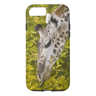 Coque iPhone 7 L'Afrique. La Tanzanie. Girafe de masai chez