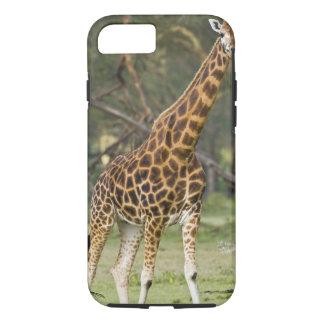 Coque iPhone 7 L'Afrique. Le Kenya. La girafe de Rothschild au