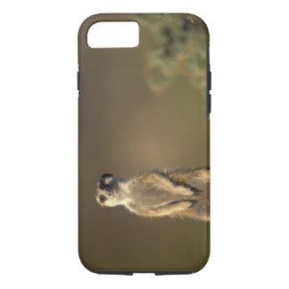 Coque iPhone 7 L'Afrique, Namibie, Keetmanshoop, Meerkat