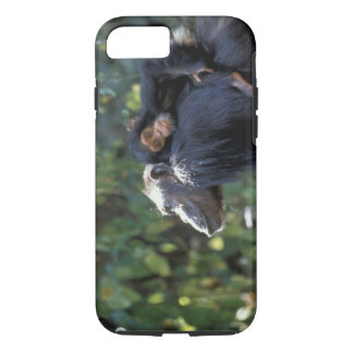 Coque iPhone 7 L'AFRIQUE, Tanzanie, Gombe NP, chimpanzés.