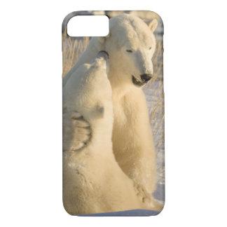 Coque iPhone 7 Le Canada, Manitoba, baie de Hudson, Churchill.