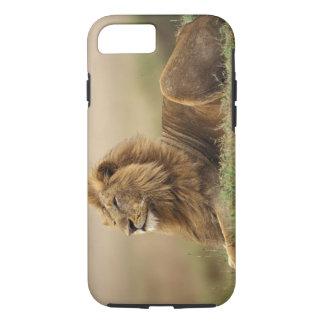 Coque iPhone 7 Le Kenya, masai Mara. Lion de mâle adulte sur le