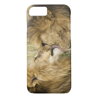 Coque iPhone 7 Le Kenya, masai Mara. Plan rapproché d'un lion