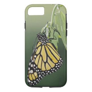 Coque iPhone 7 Le monarque, plexippus de Danaus, adulte a