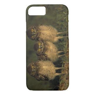 Coque iPhone 7 Les Etats-Unis, la Floride, corail de cap. Trois