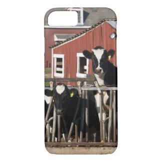 Coque iPhone 7 Les Holsteins à la ferme marécageuse de pré dans