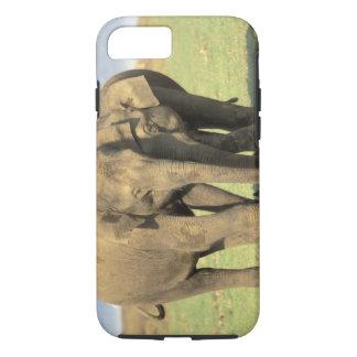 Coque iPhone 7 L'Inde, parc national de Nagarhole. Éléphant