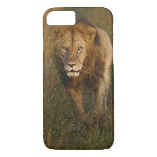 Coque iPhone 7 Lion de mâle adulte marchant par des voies de